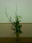 お正月のお花①